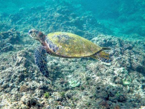 Island of Kauai | Hideaways Beach | Princeville