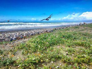 San Diego - Carlsbad - South Carlsbad State Beach - Beach (IG)