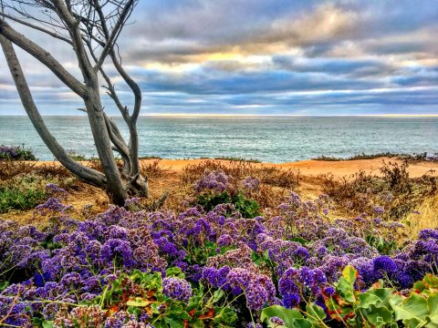 San Diego - Carlsbad - Canon Cliffs - Self Awareness