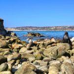 Creative Real Estate Marketing | San Diego - La Jolla - La Jolla Cove - Seals - Beach